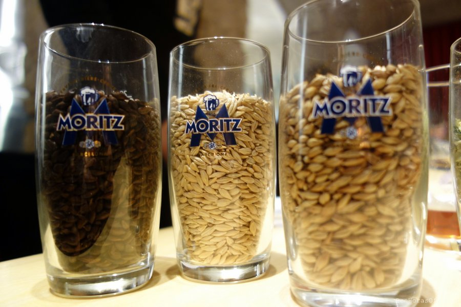 Variedades de cereales