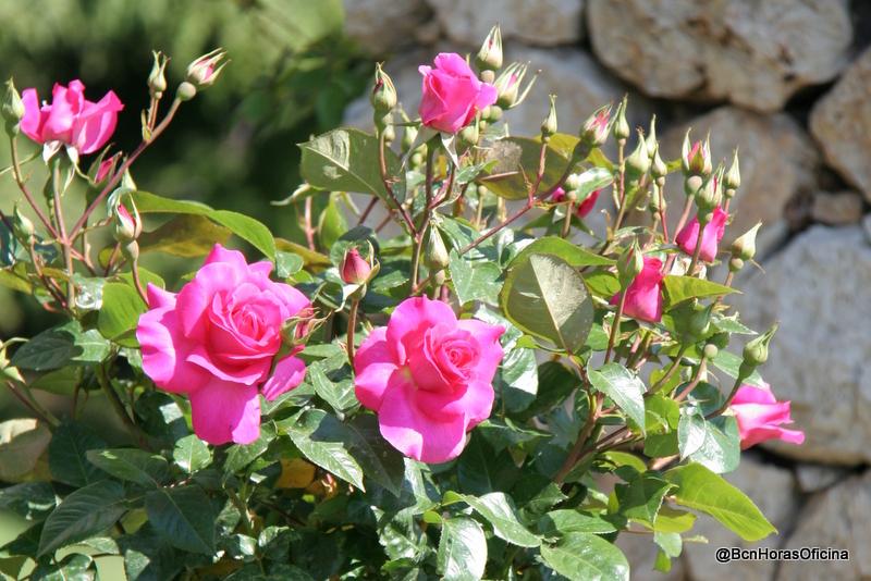 IMG_9645 Rosaleda