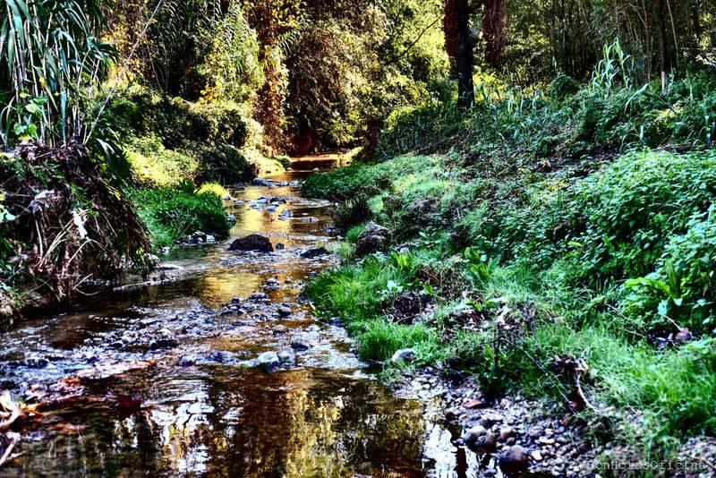 Camí del riu